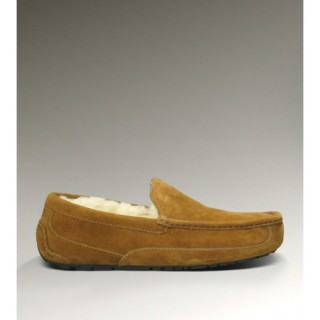 Ugg Ascot-Suede 5775 Chaussons Chataigne